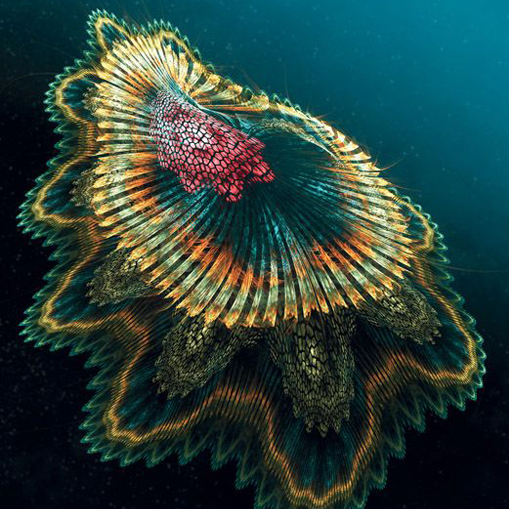 Photo of a Spanish Dancer fish